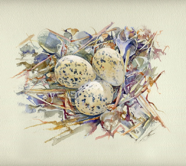 [Avocet's Eggs]